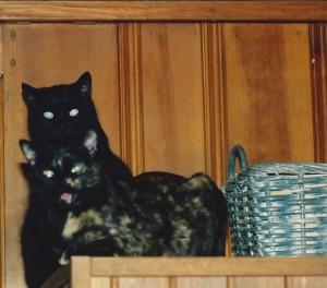 Sebastian (black) and Samantha (tortoiseshell) circa 1998.